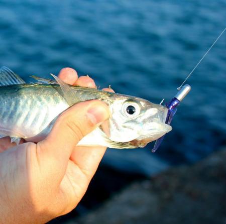 где в севастополе есть рыбалка
